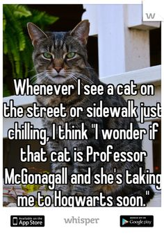 Mcgongall Cat